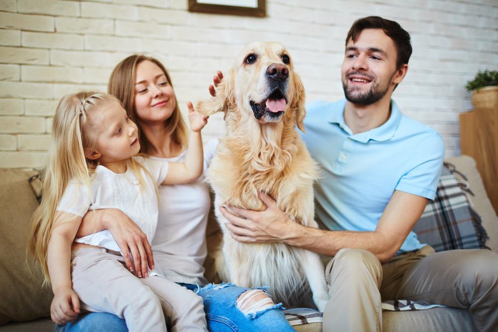 psie lata - jak się liczy wiek psa?