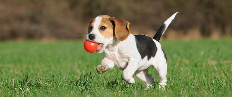 jak bawić się z psem na dworze