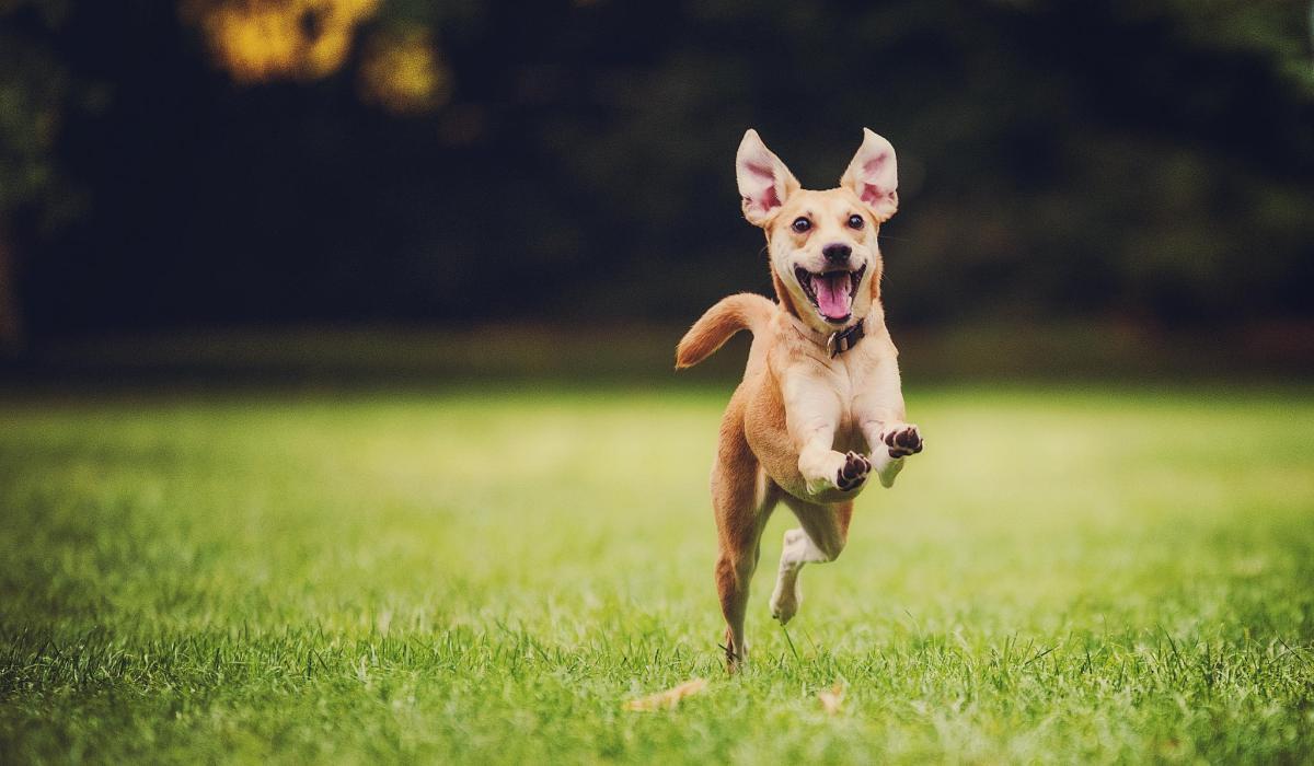 jak nauczyć psa aportować