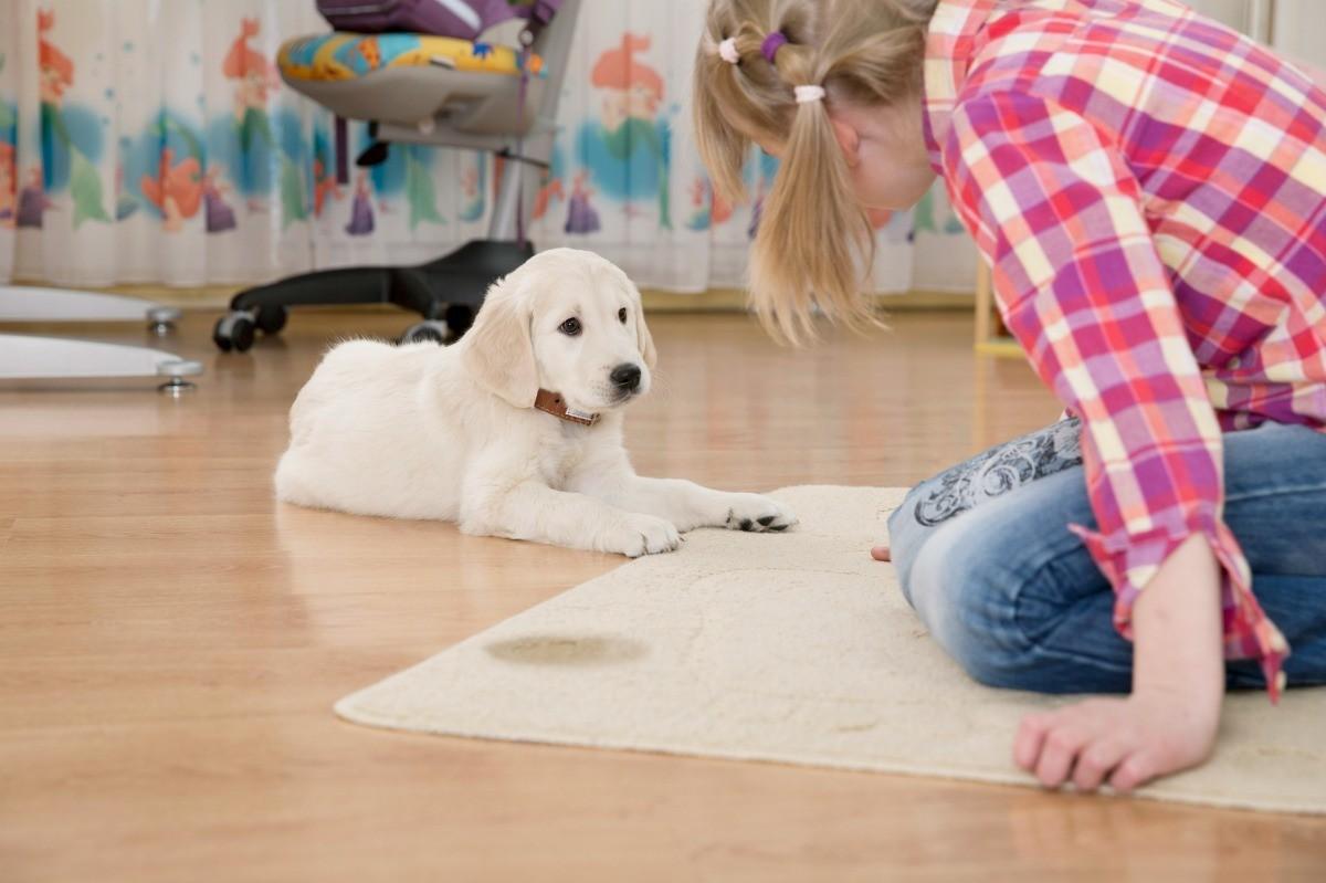 jak oduczyć psa sikania w domu