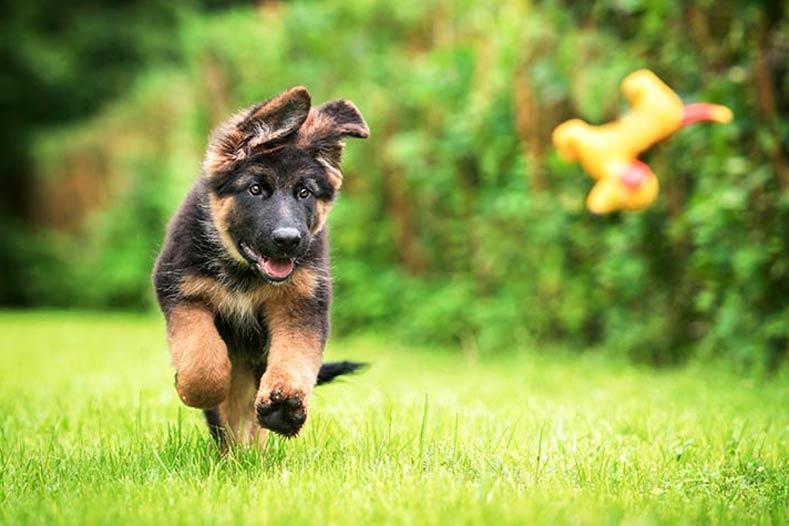 jak nauczyć psa aportowania