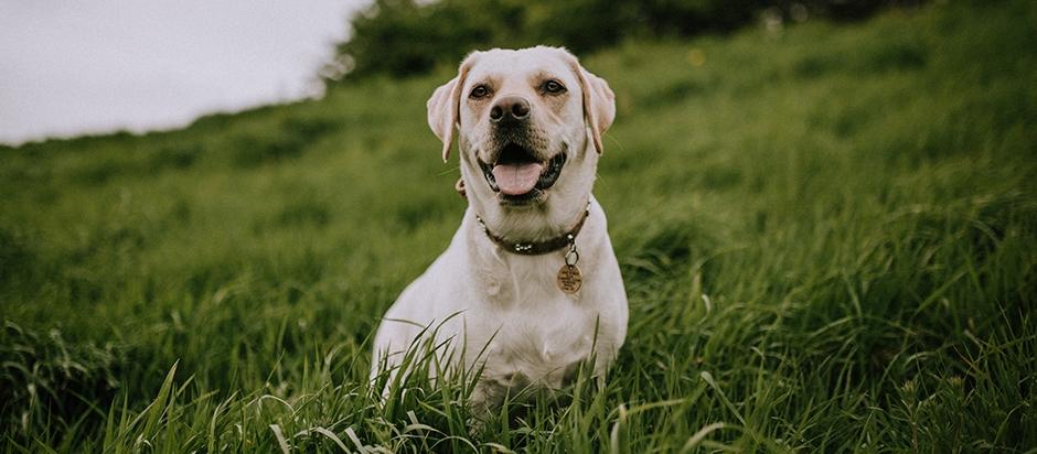 jak nauczyć psa sikać na dworze