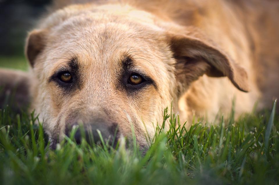 pies nie chce jeść i jest osowiały