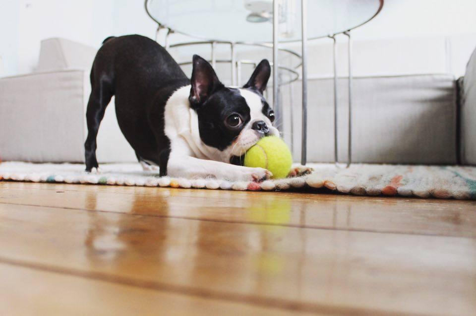 zabawa z psem w domu