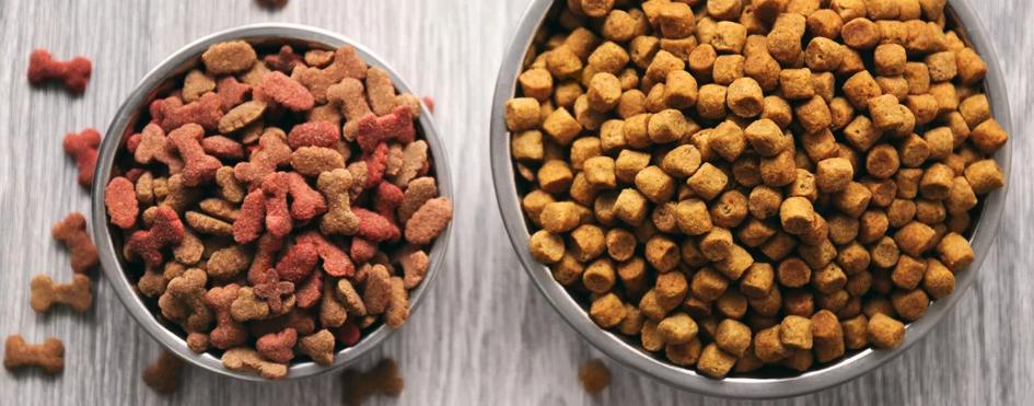 Jaka sucha karma dla psa?
