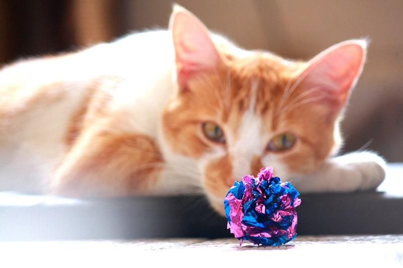 smakołyki i zabawki dla kota