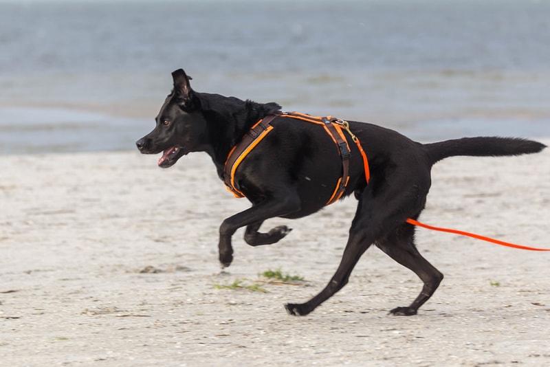 bieganie z psem dla początkujących