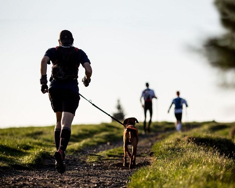 jak zacząć biegać z psem
