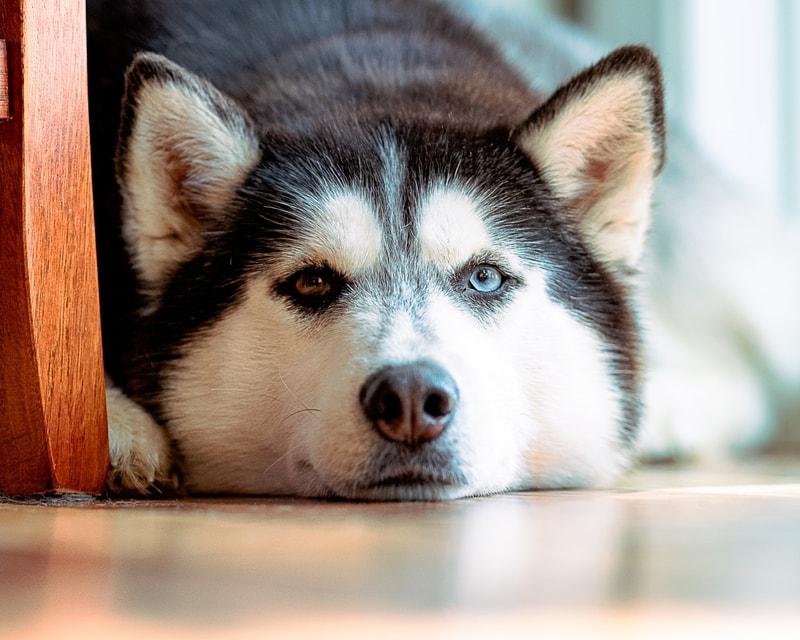 co podać psu na biegunke