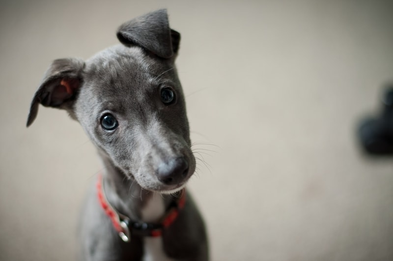 jak wychować idealnego psa