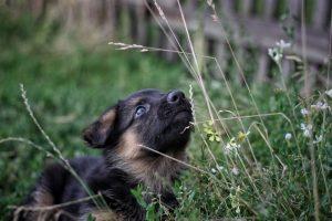czemu psy jedzą trawę