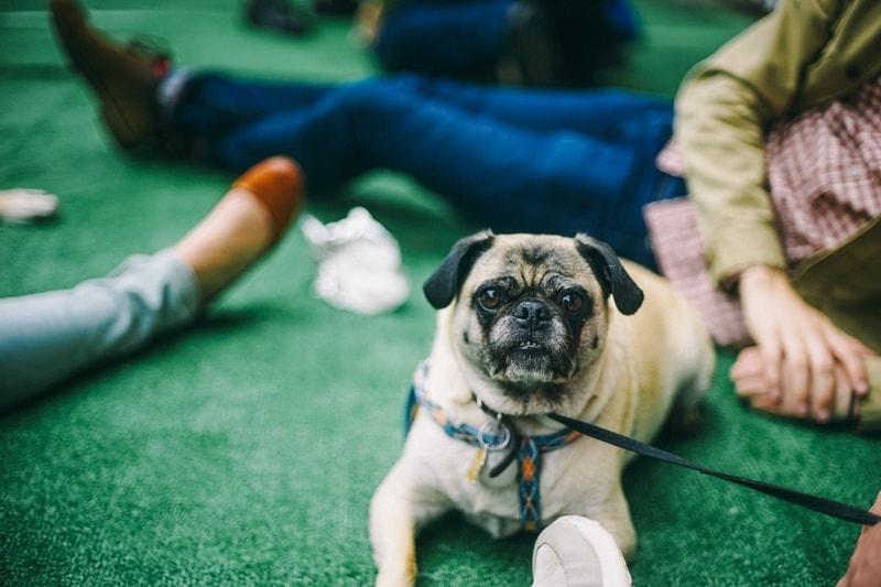 dlaczego pies gryzie buty