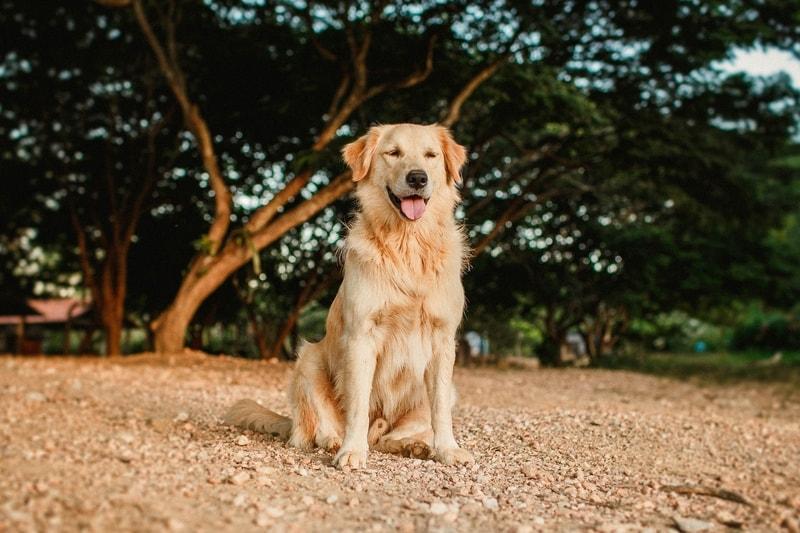 najlepsze psy dla dzieci