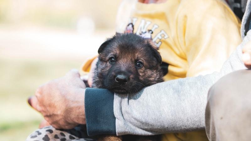 odrobaczanie psa