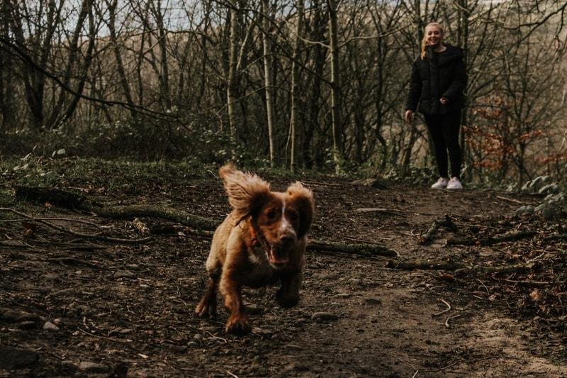 pies ucieka na spacerze