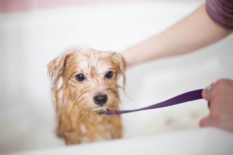 jak często można kąpać psa