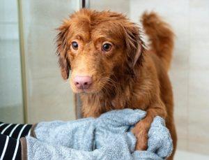jak często myć psa