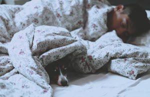 spanie z psem