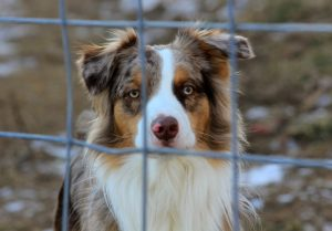 jak wybrać psa ze schroniska