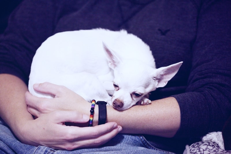alergia skórna u psa objawy