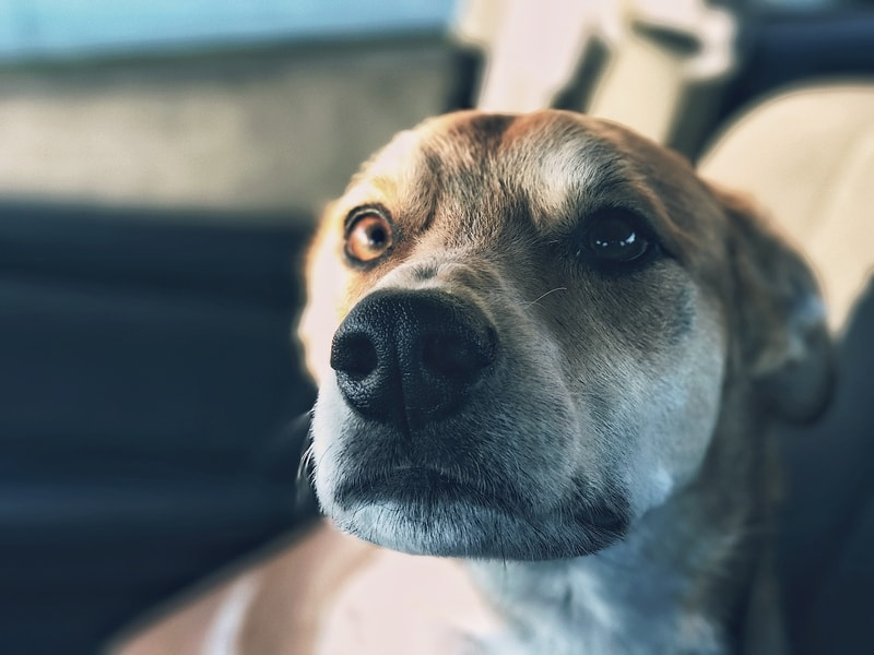 jak pomóc psu z alergią skórną