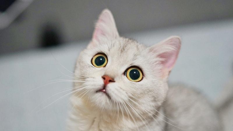 czy koty widzą kolory
