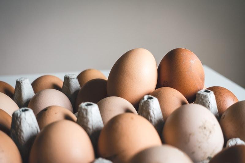 gotowane jajko dla kota