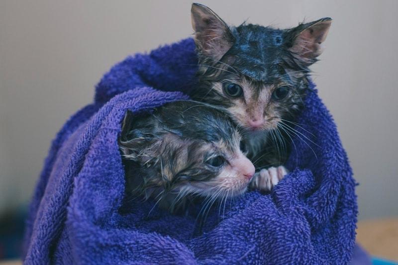 jak kąpać kota