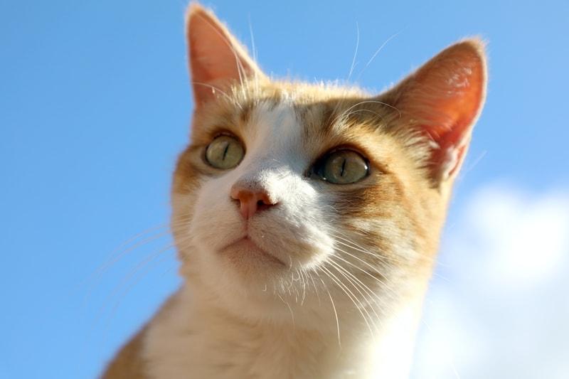 jak koty widzą ludzi