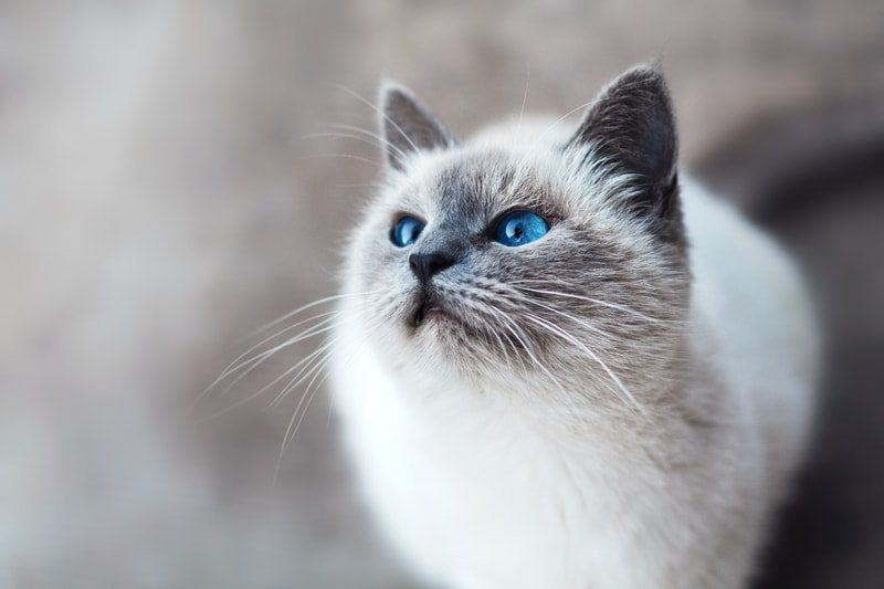 jak koty widzą świat