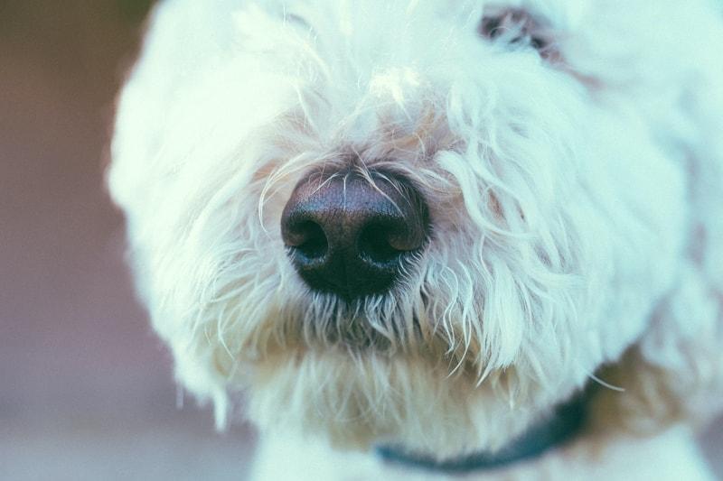 jak zrobić zabawki węchowe dla psa