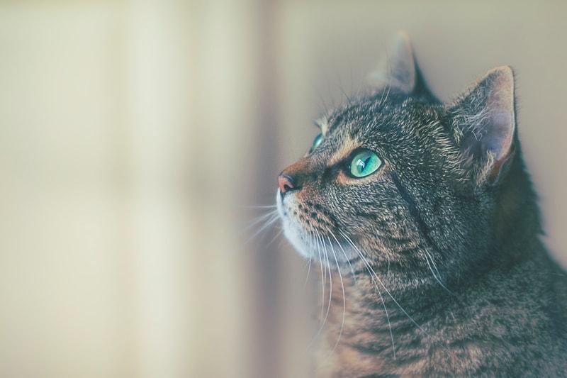 koty widzą kolory
