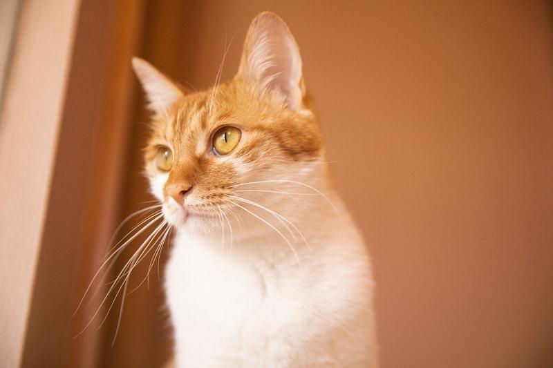 surowe żółtko dla kota