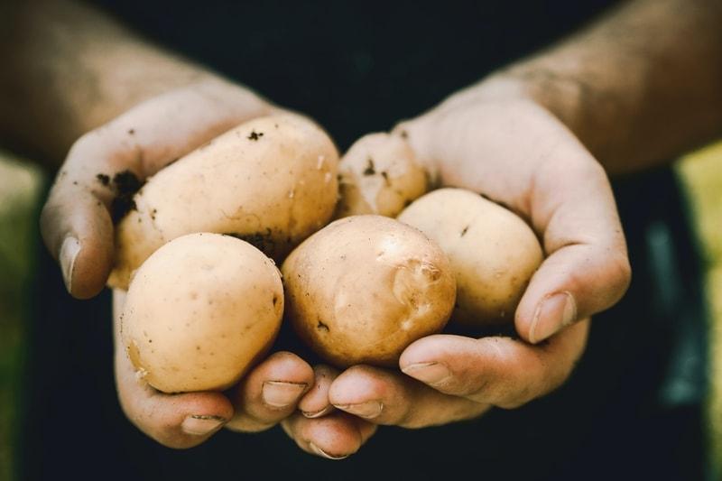 ziemniaki dla psa