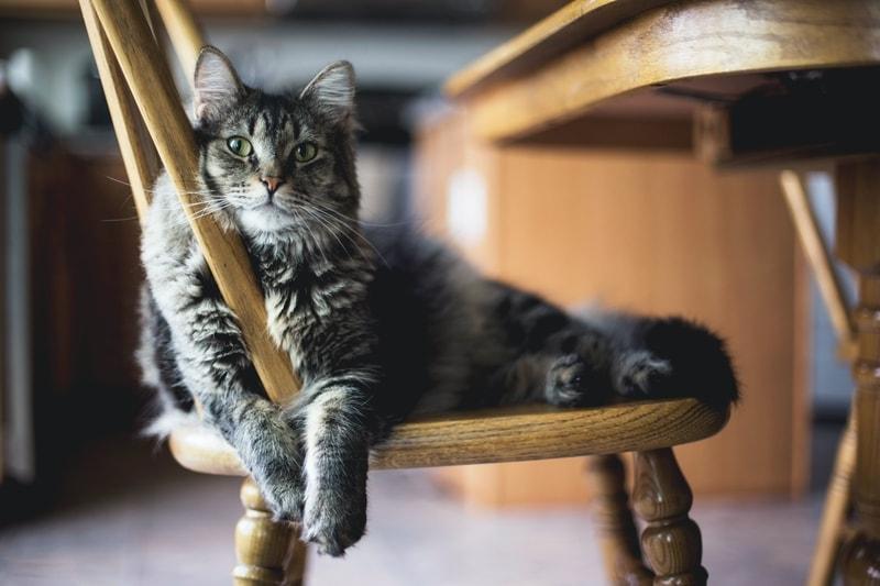 ile kosztuje miesięczne utrzymanie kota