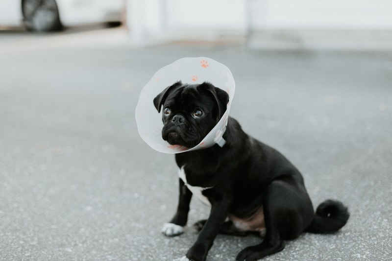 kolnierz ochronny dla psa