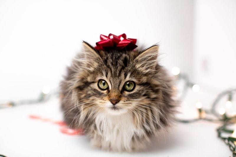 koszt utrzymania kota