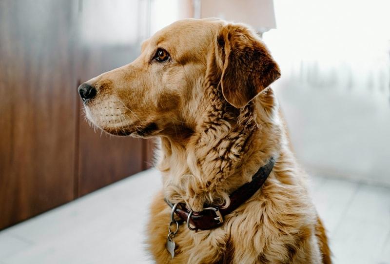 przykładowa dieta dla psa z niewydolnością nerek
