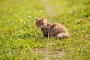wyprowadzanie kota na spacer