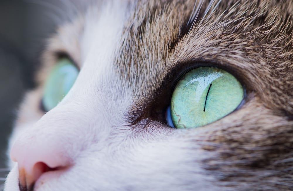 Jak widzą koty? Kolory oraz świat widziany oczami kota