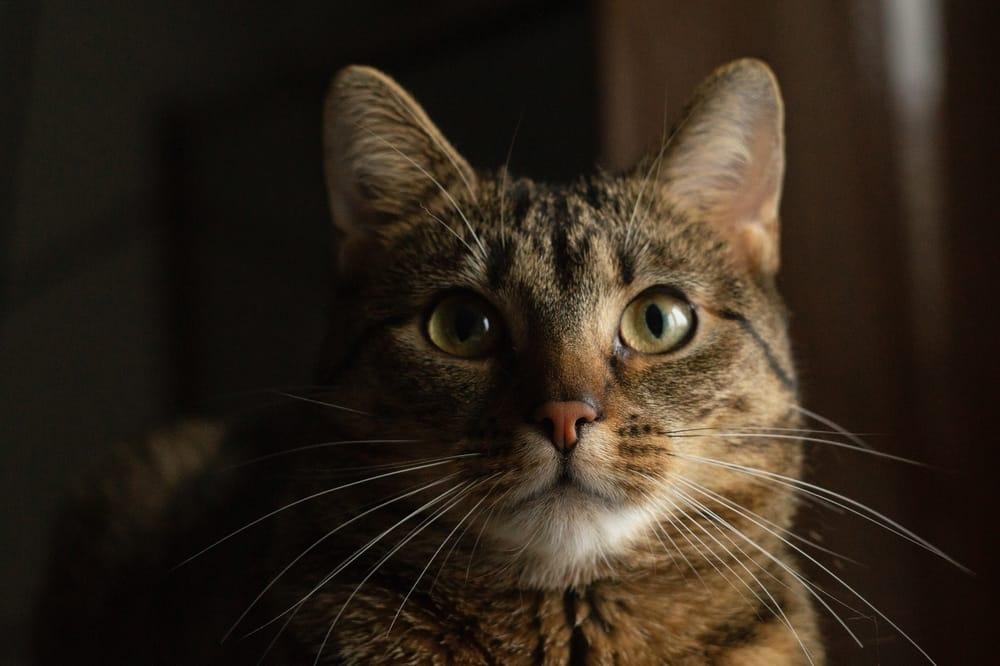 Jak zachowuje się koci wzrok i jak widzą koty w ciemności?