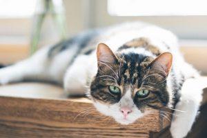 Wiek kota na ludzkie - tabela oraz kalkulator. Jak określić wiek kota?